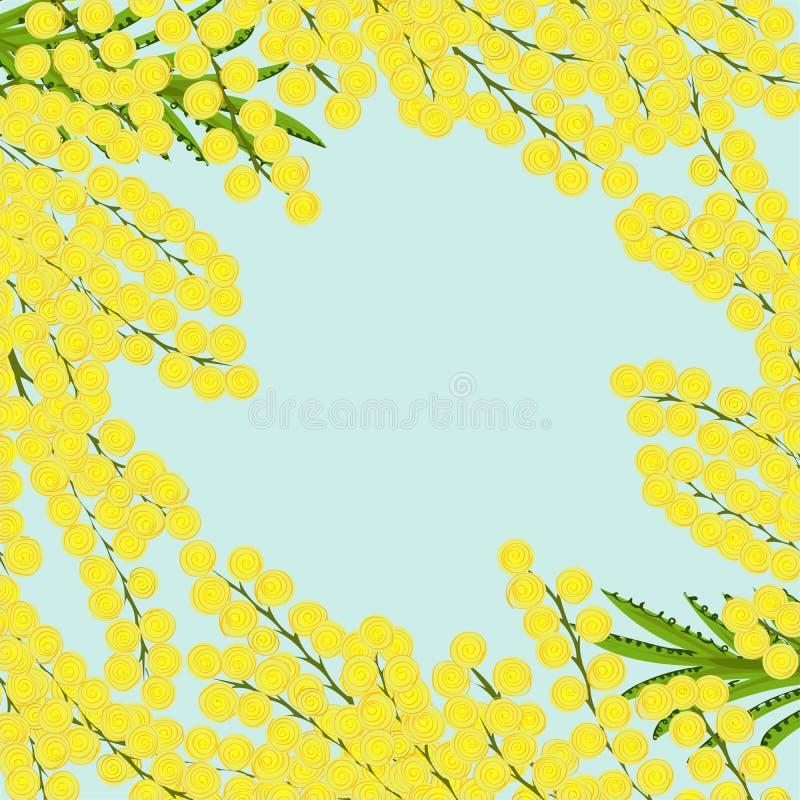 Cadre floral de fond de mimosa de branches illustration stock
