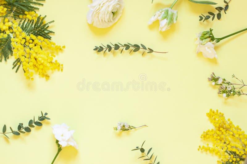 Cadre floral de ressort avec des mimosas sur le fond blanc Vue sup?rieure images stock