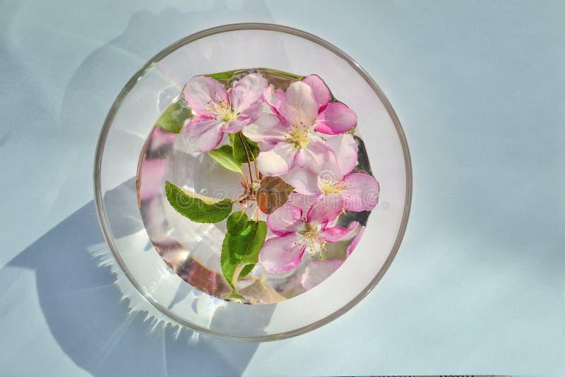 Cadre floral de ressort de fleur rose de pommier dans la cuvette avec de l'eau image stock