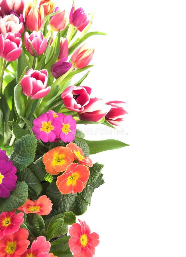 Cadre floral de tulipe et de primevère images libres de droits