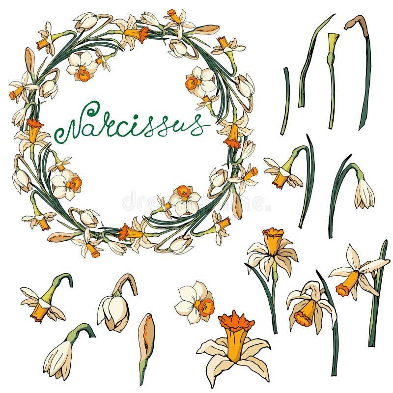 Cadre floral de vecteur avec des jonquilles illustration libre de droits