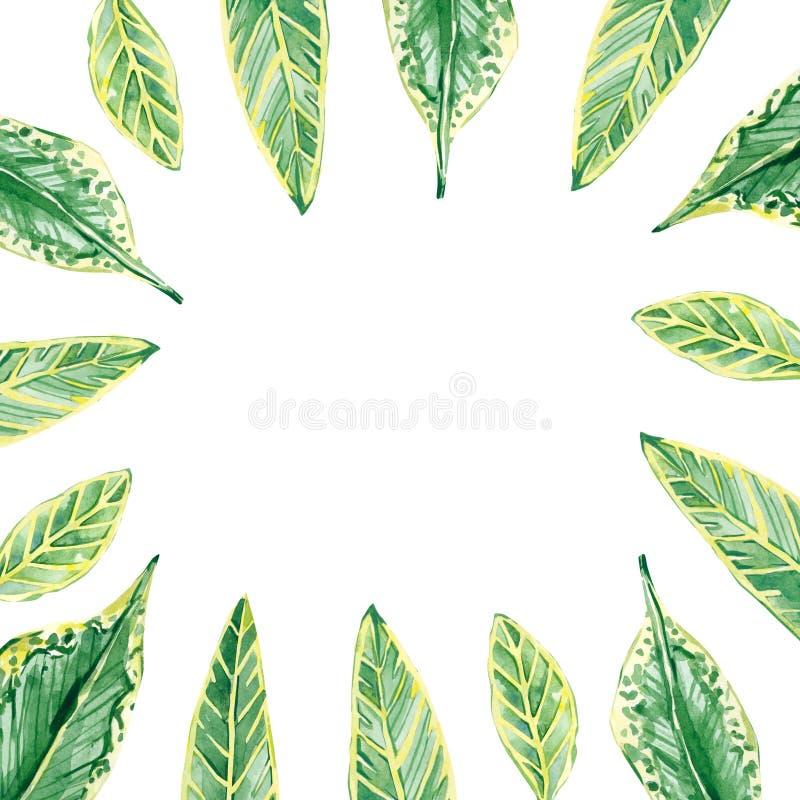 Cadre floral tropical d'aquarelle Illustration d'?t? pour des cartes de voeux d'invitation, de mariage ou illustration stock