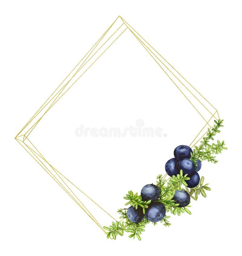 Cadre géométrique d'or avec les baies du nord de forêt noire du crowberry, peintes dans l'aquarelle Idéal pour épouser des invita illustration de vecteur