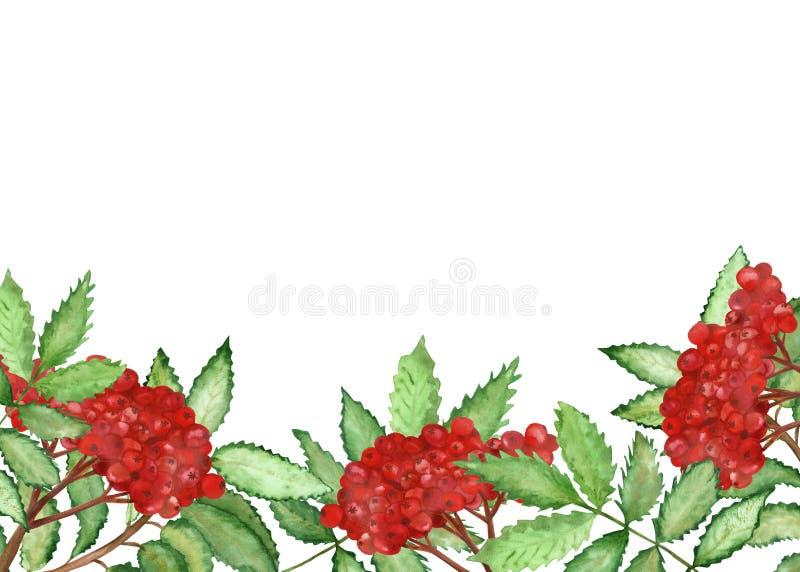 Cadre peint à la main de bannière de nature de branches de sorbe d'aquarelle avec de petites baies rouges et feuilles vertes pour illustration stock