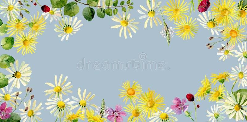 Cadre rectangulaire des fleurs sauvages d'aquarelle sauvage illustration stock