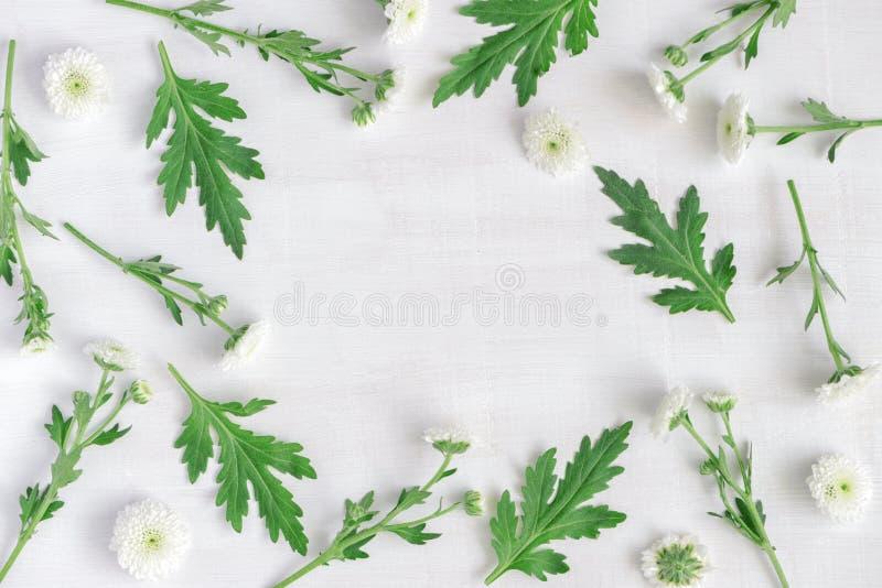 Cadre rond de beaux chrysanthèmes blancs et de feuilles vertes photographie stock
