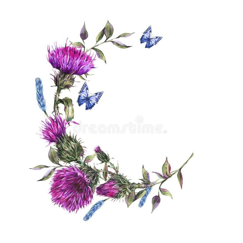 Cadre rond de chardon d'aquarelle, papillons bleus, illustration de fleurs sauvages illustration stock