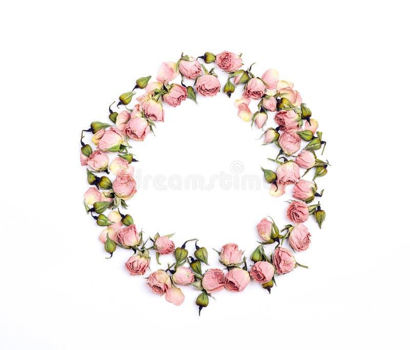 Cadre rond de petites roses roses sèches sur le fond blanc Placez f photo stock