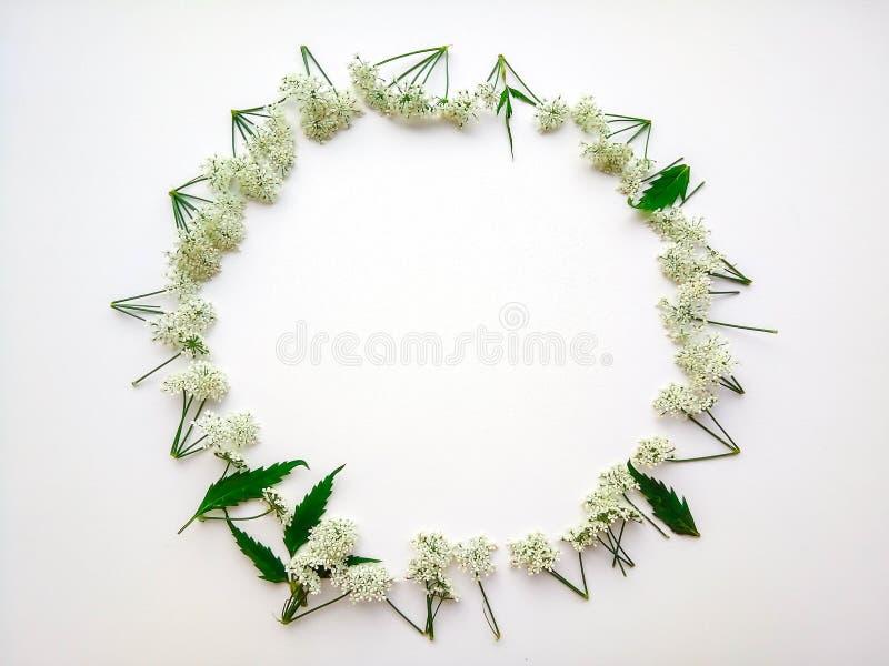 Cadre rond des fleurs blanches photo stock