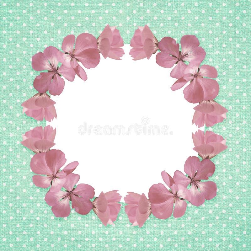 Cadre rose avec des fleurs de géranium illustration de vecteur