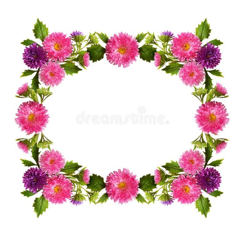 Cadre rose et pourpre de fleurs et de bourgeons d'aster images libres de droits