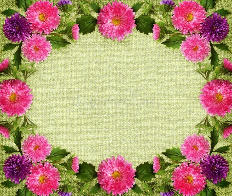 Cadre rose et pourpre de fleurs et de bourgeons d'aster sur la toile verte image libre de droits