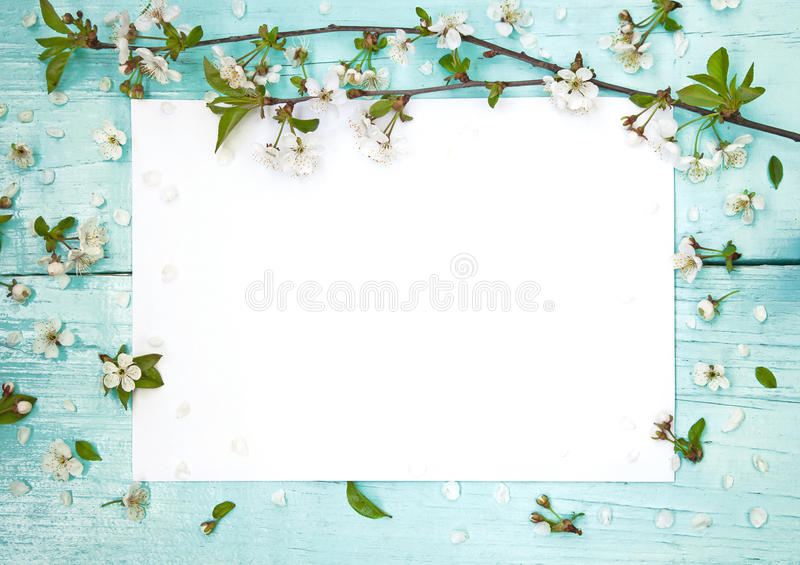 Cadre sensible avec des fleurs de cerise image stock