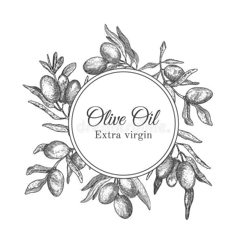 Cadre tiré par la main d'encre avec la branche d'olivier illustration de vecteur