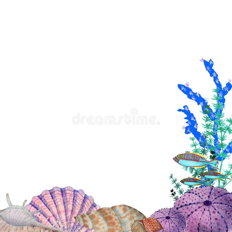 Cadre tiré par la main dans l'élément naturel du monde de mer d'aquarelle Les coquilles de coraux pêchent la frontière de cadre s illustration libre de droits