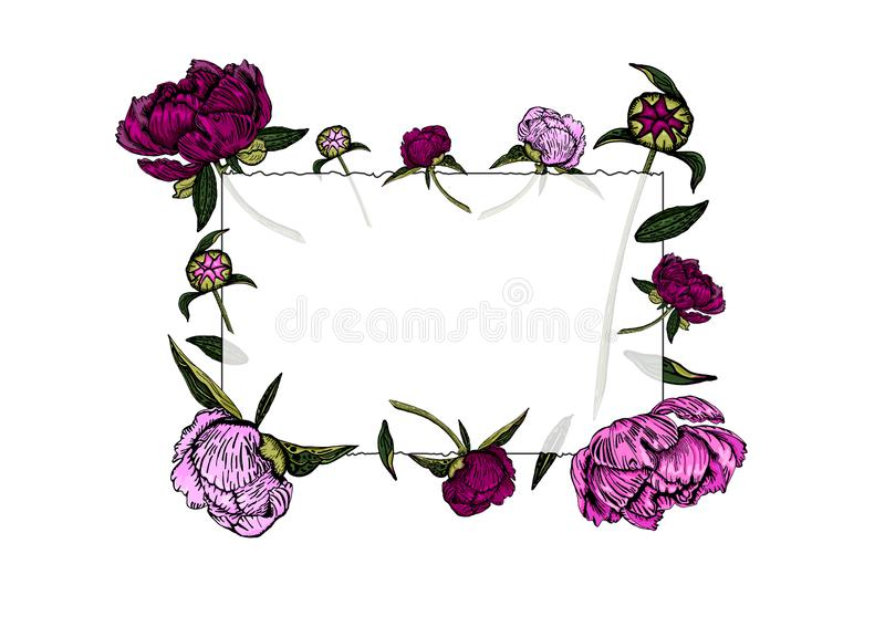 Cadre transparent des fleurs colorées de pivoine, bourgeons et feuilles, tirés par la main illustration stock