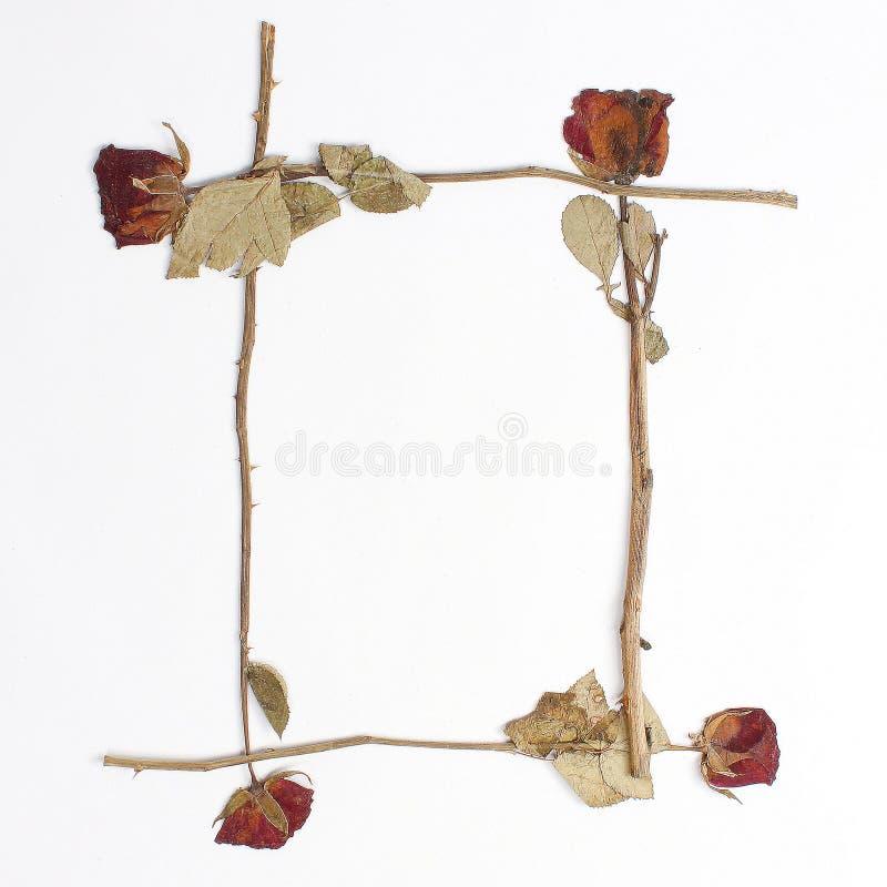 Cadre vide de roses sèches intemporel photos libres de droits