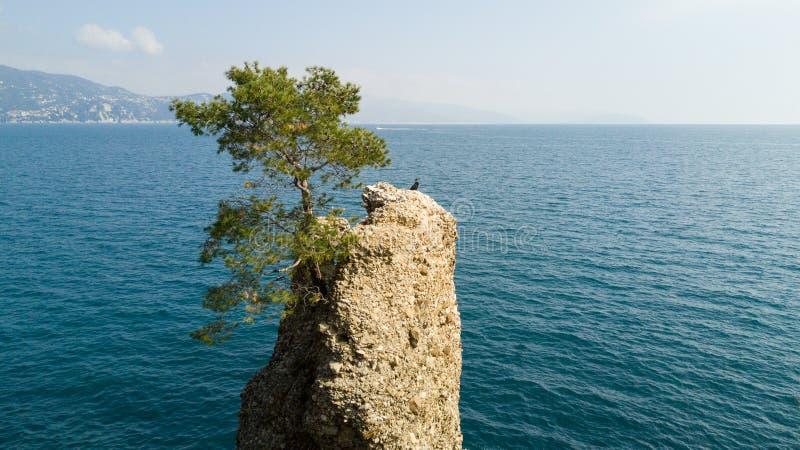 Cadrega、海杉树、鸟瞰图、江边在圣马尔盖里塔利古雷之间和菲诺港利古里亚岩石, 免版税库存图片