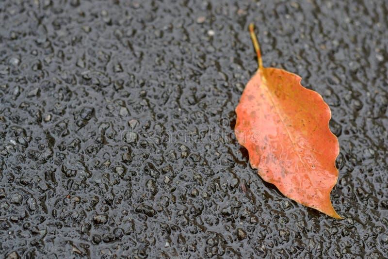 Caduta arancio della foglia su terra in autunno fotografie stock