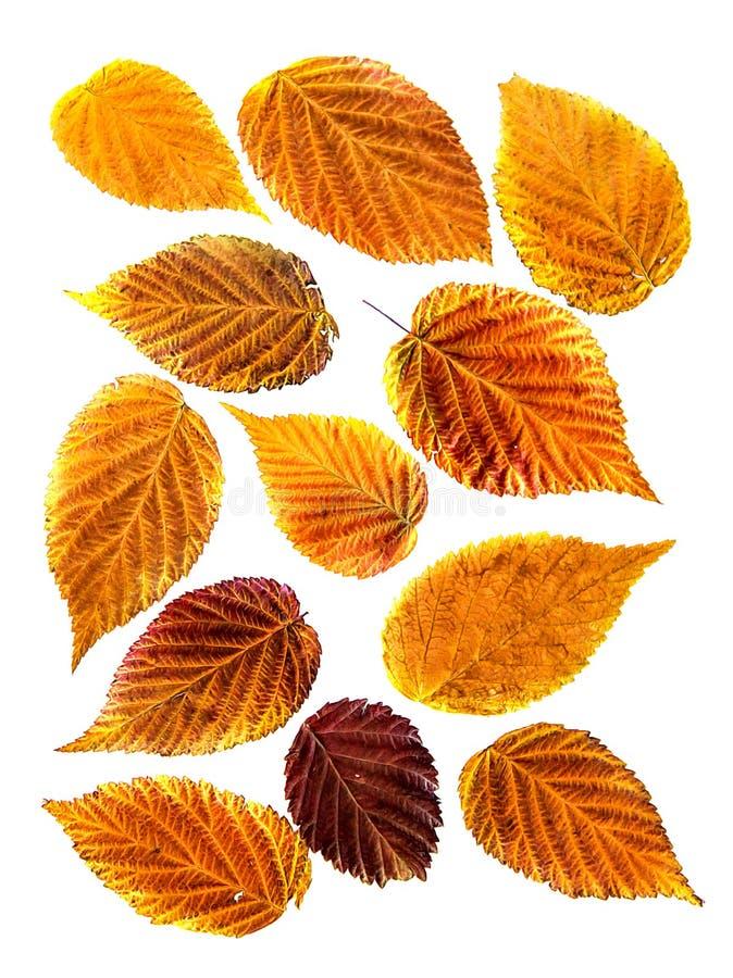 Caduta asciutta arancio, foglia gialla e rossa della pittura ad olio del lampone, tiraggio immagini stock libere da diritti