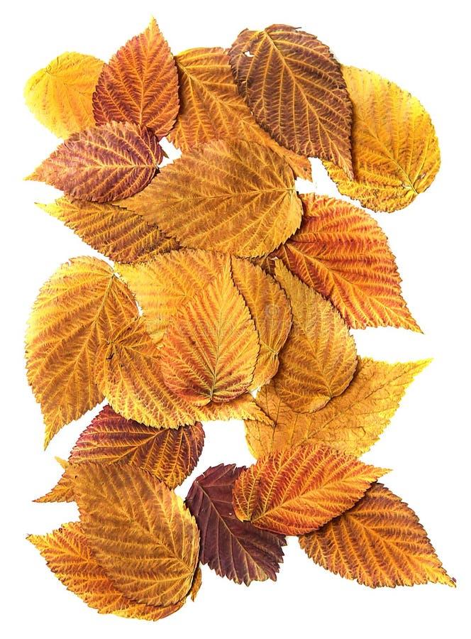 Caduta asciutta arancio, foglia gialla e rossa della pittura ad olio del lampone, tiraggio immagini stock