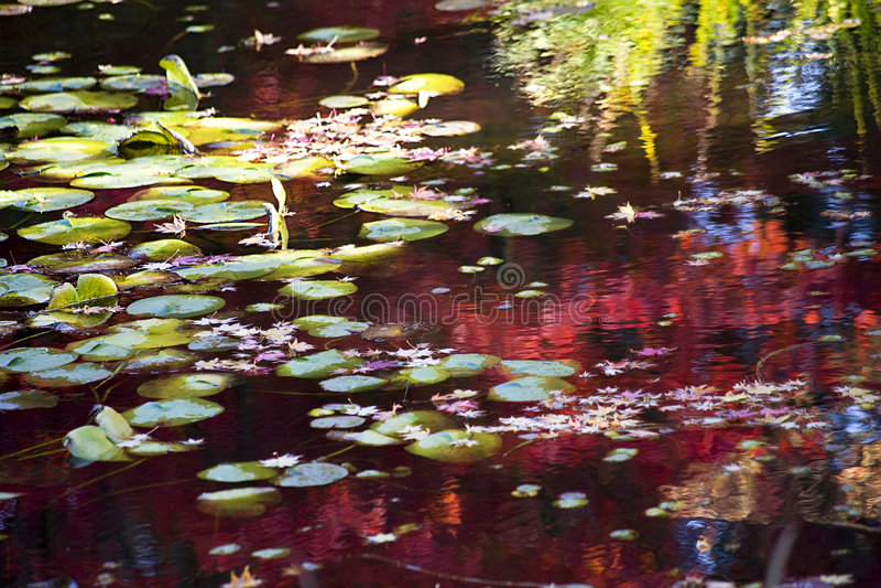 Caduta Colors Reflections Van Dusen Gardens fotografia stock libera da diritti