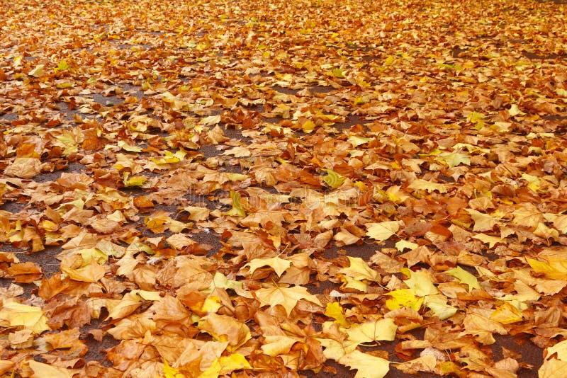 Caduta dei fogli di autunno fotografie stock
