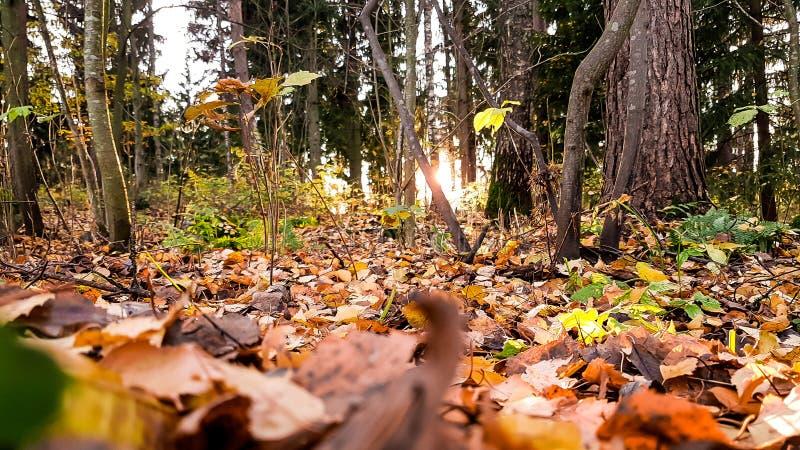 Caduta del foglio nella sosta di autunno fotografie stock