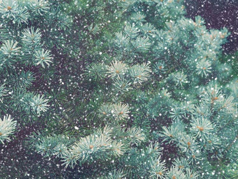 Caduta della neve nel Natale della foresta di inverno magico fotografia stock