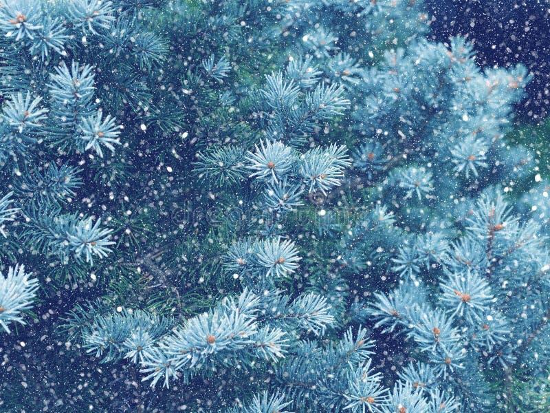 Caduta della neve nel Natale della foresta di inverno magico immagini stock libere da diritti