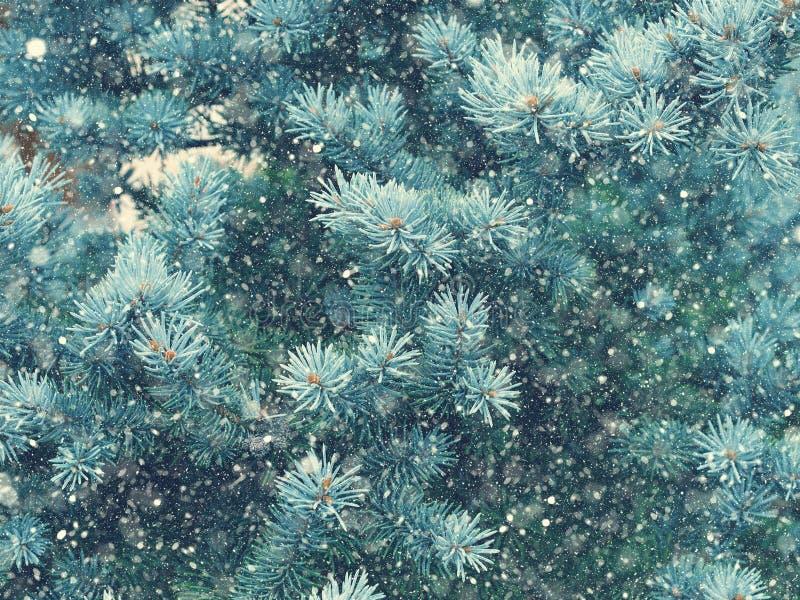 Caduta della neve nel Natale della foresta di inverno magico fotografia stock libera da diritti