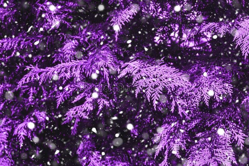 Caduta della neve nel tono porpora della foresta di inverno immagine stock