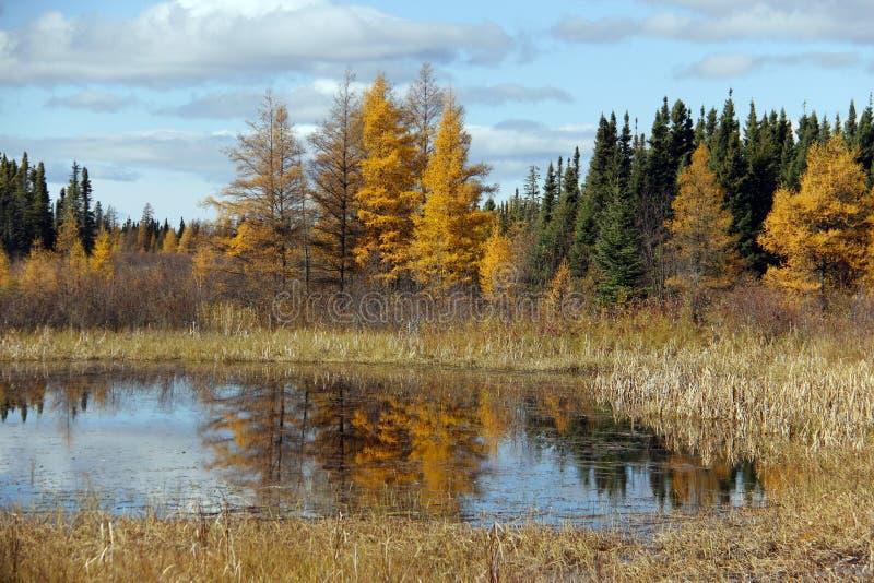 Caduta di Manitoba fotografie stock libere da diritti