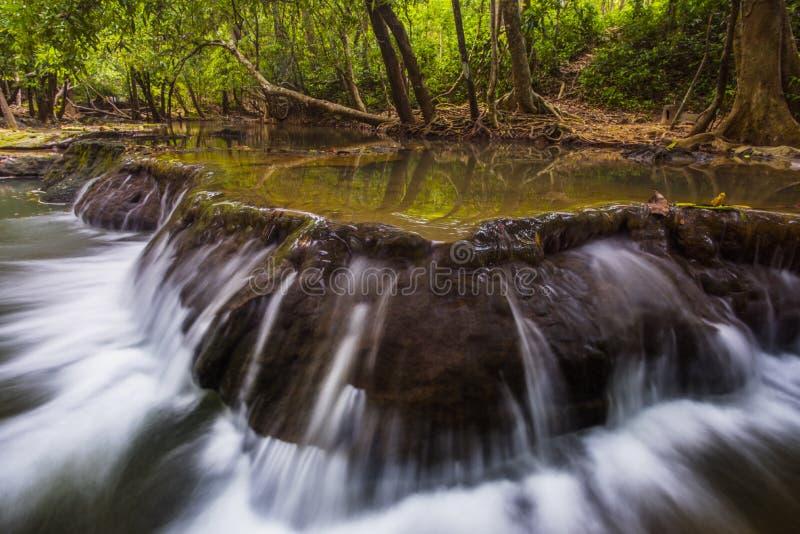 Caduta ed alberi dell'acqua fotografie stock