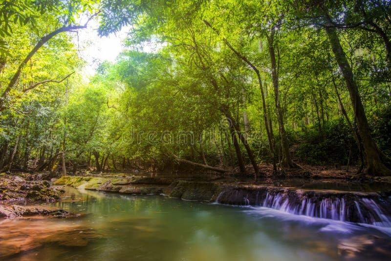 Caduta ed alberi dell'acqua fotografia stock