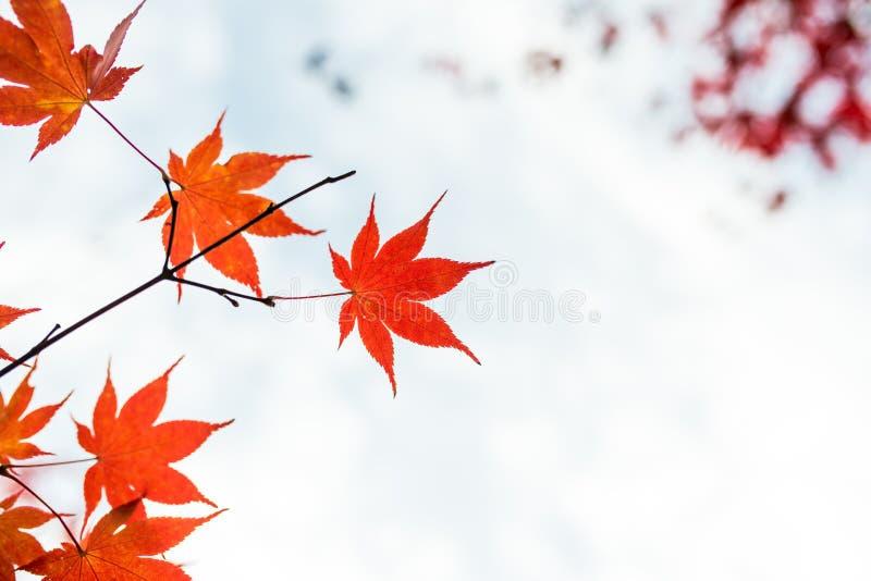 Caduta Foglie di acero di autunno e cielo di autunno fotografie stock libere da diritti