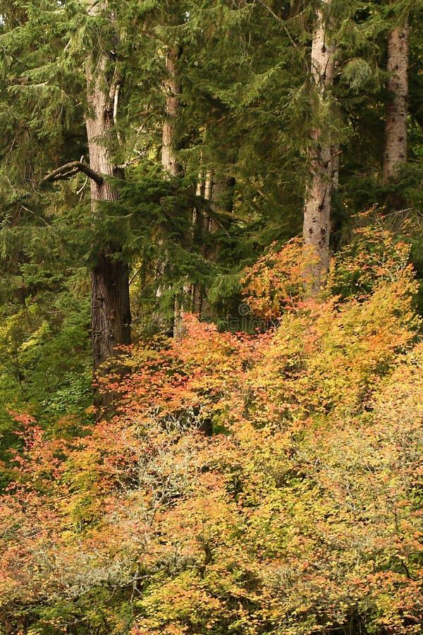 Caduta, grande insenatura, vicino a Knappa, l'Oregon immagine stock