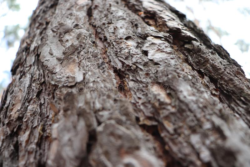 Caduta naturale del pino dell'albero del paesaggio fotografia stock