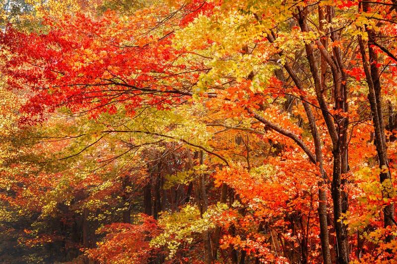 Caduta nelle montagne di Ridge blu fotografia stock libera da diritti