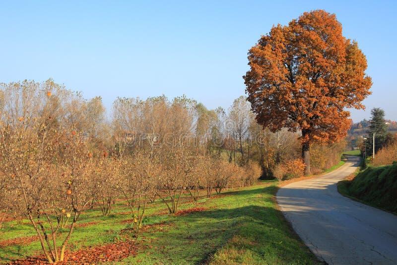 Caduta in Piemonte. fotografia stock