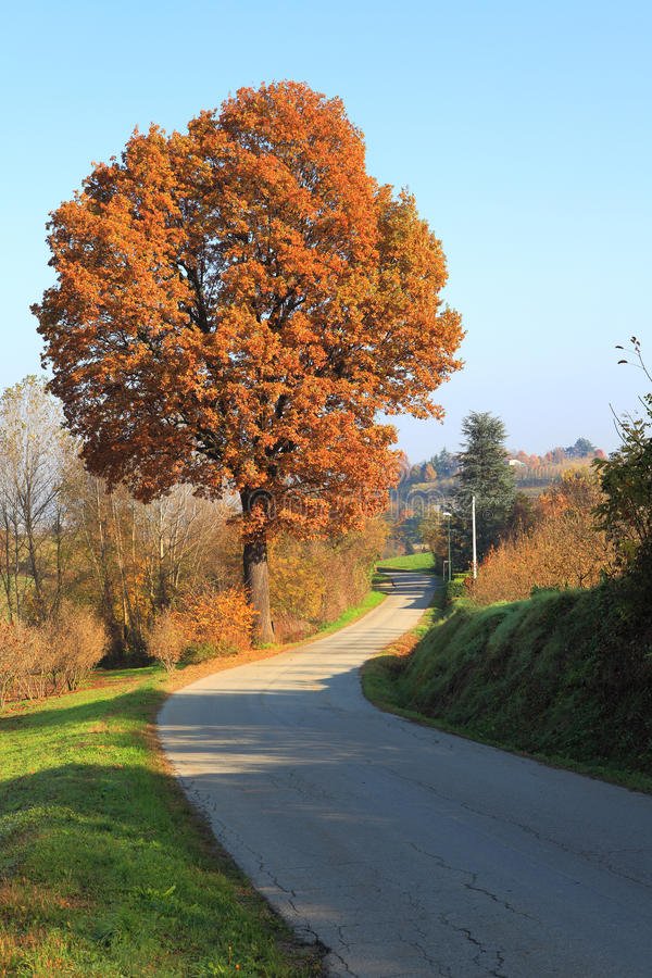 Caduta in Piemonte. fotografie stock libere da diritti