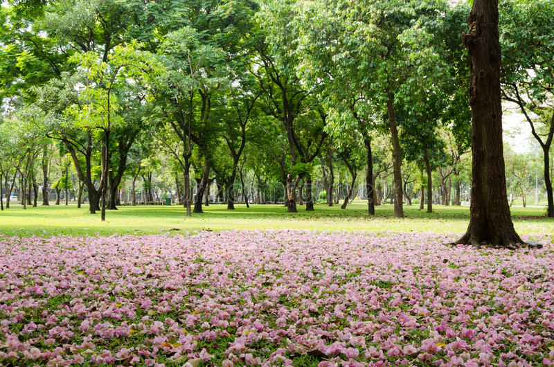 Caduta rosa del fiore su erba verde immagini stock