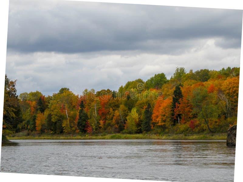 Caduta sulla riva del lago fotografia stock libera da diritti