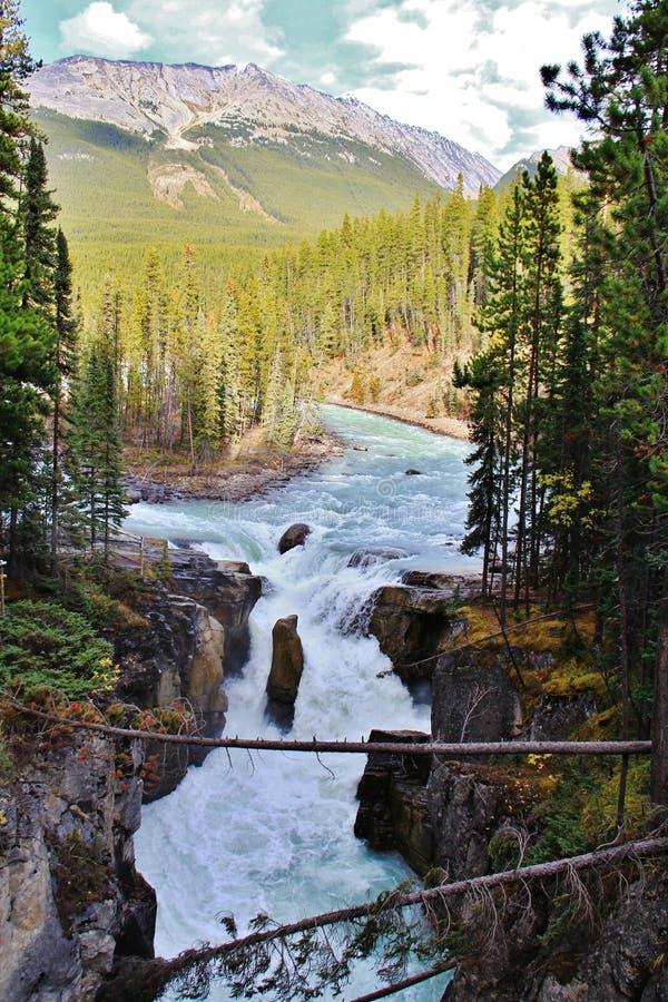 Cadute di Athabasca, diaspro, Alberta fotografia stock