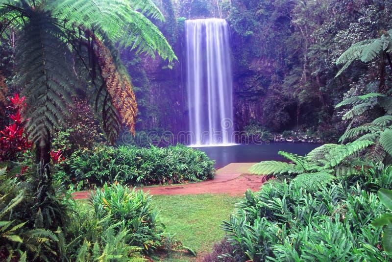 Cadute di Millaa Millaa - Australia fotografie stock libere da diritti