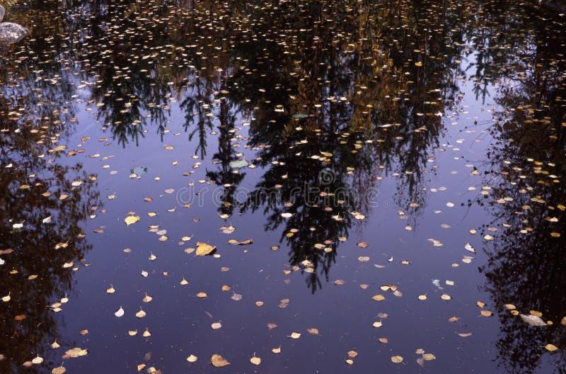 cadute su un lago fotografie stock libere da diritti