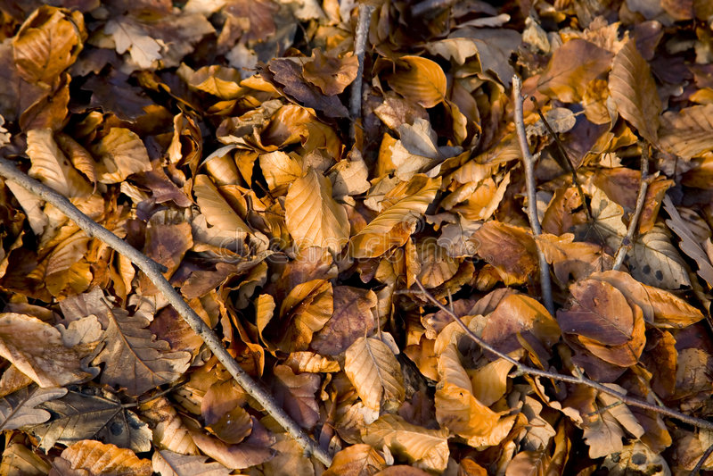 Download Caduto immagine stock. Immagine di autunno, deciduo, pavimento - 3891515