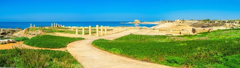 Caesarea na palma fotografia de stock