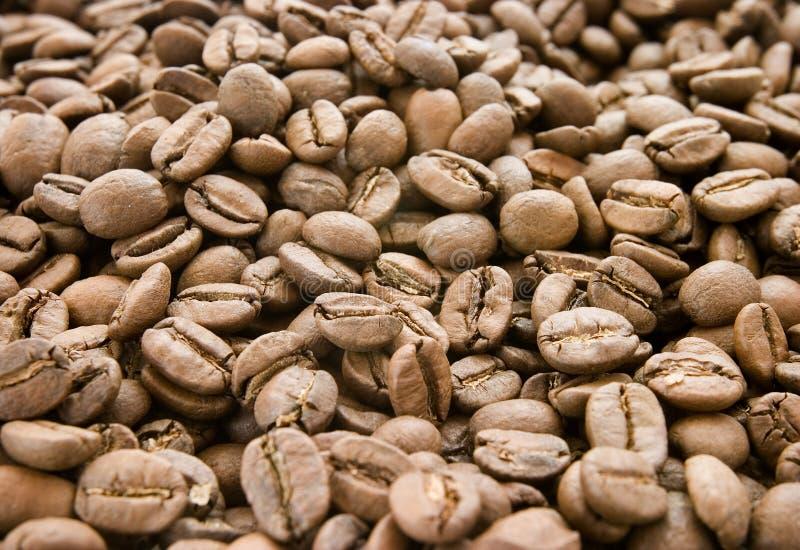 Café 4 novos imagem de stock royalty free