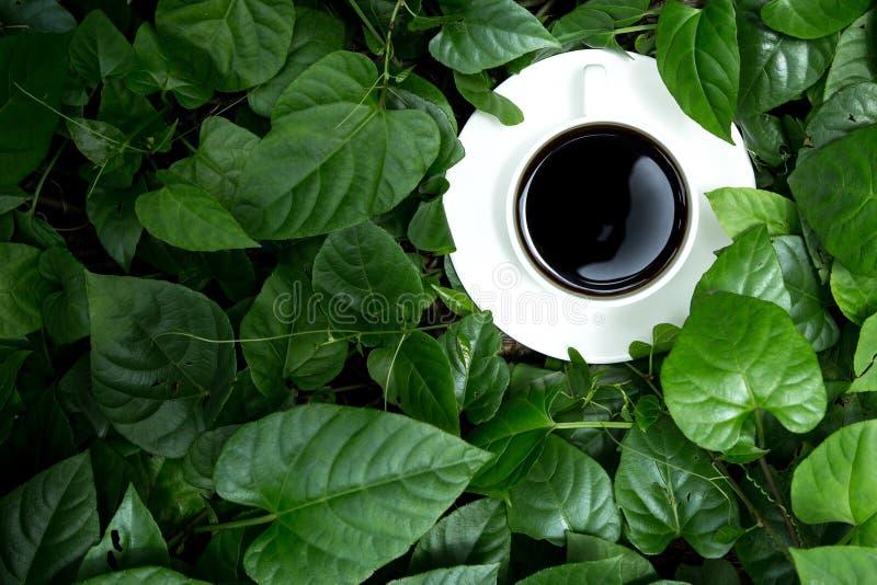 Download Café foto de archivo. Imagen de bebida, alto, elegancia - 41904734